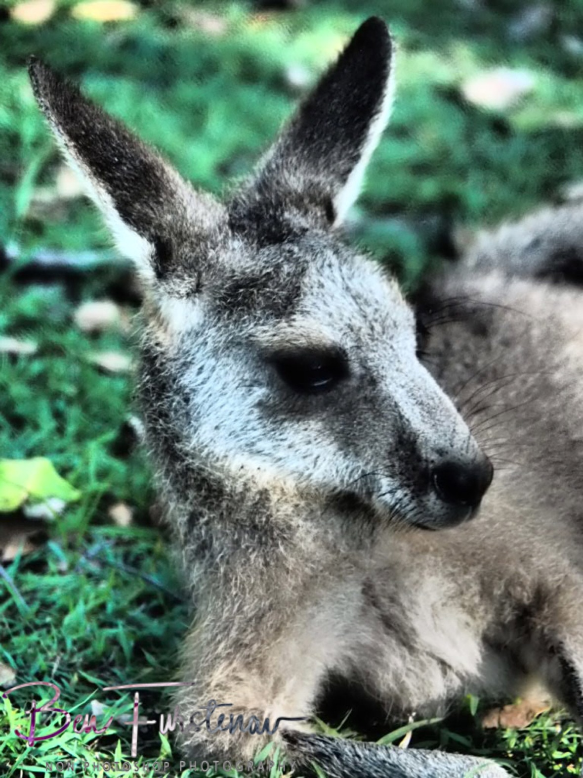 Model look @ Woody Head, Northern New South Wales, Australia