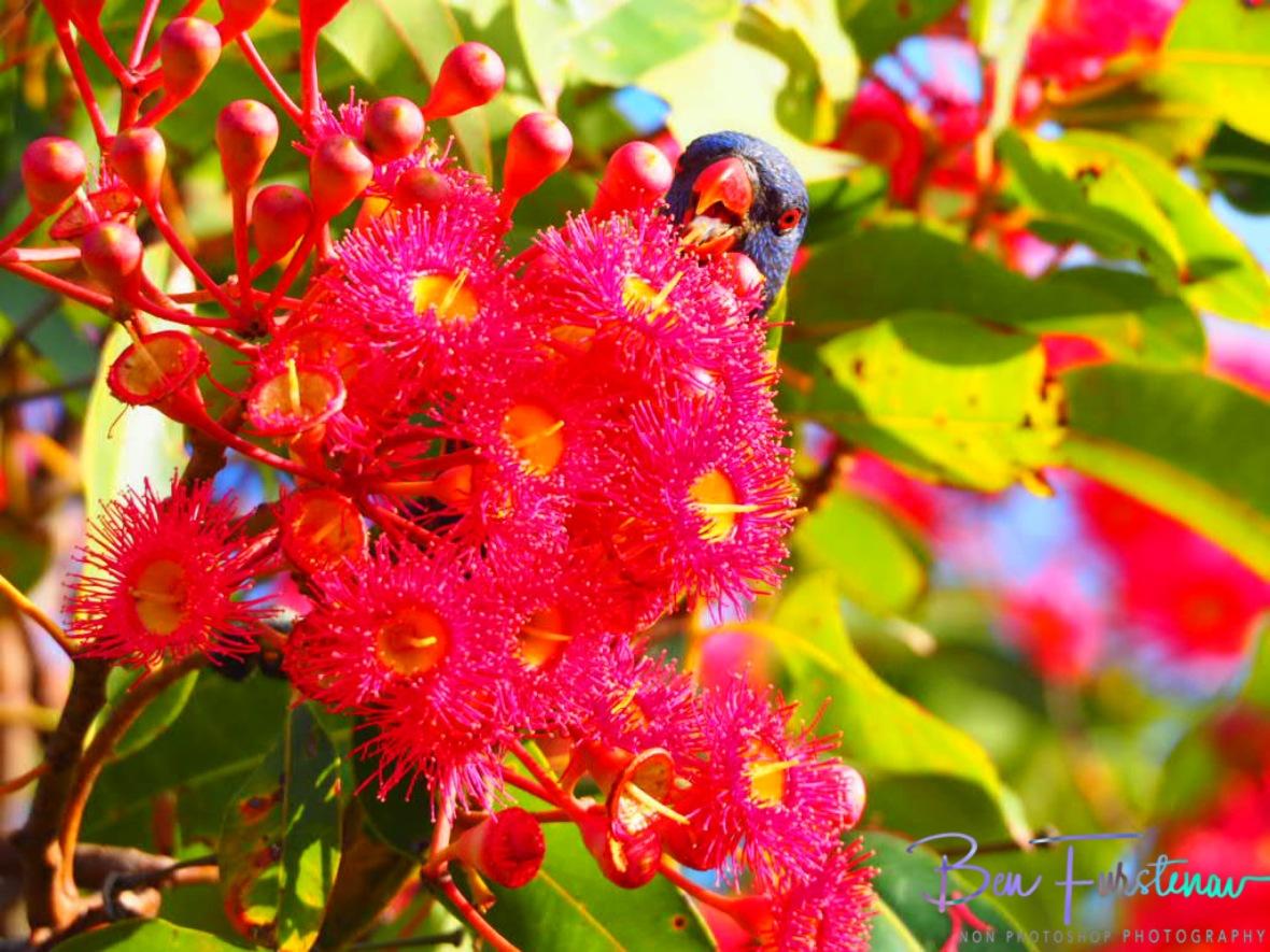 Sinta Claas @ Evans Head, Northern New South Wales, Australia