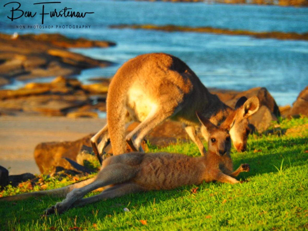 Shady behaviour @ Woody Head, Northern New South Wales, Australia