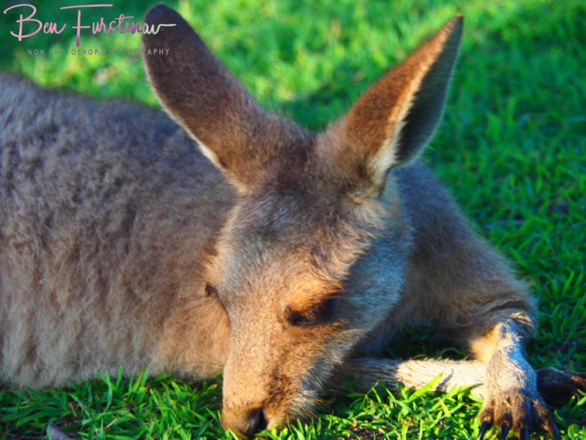 Energy saving @ Woody Head, Northern New South Wales, Australia