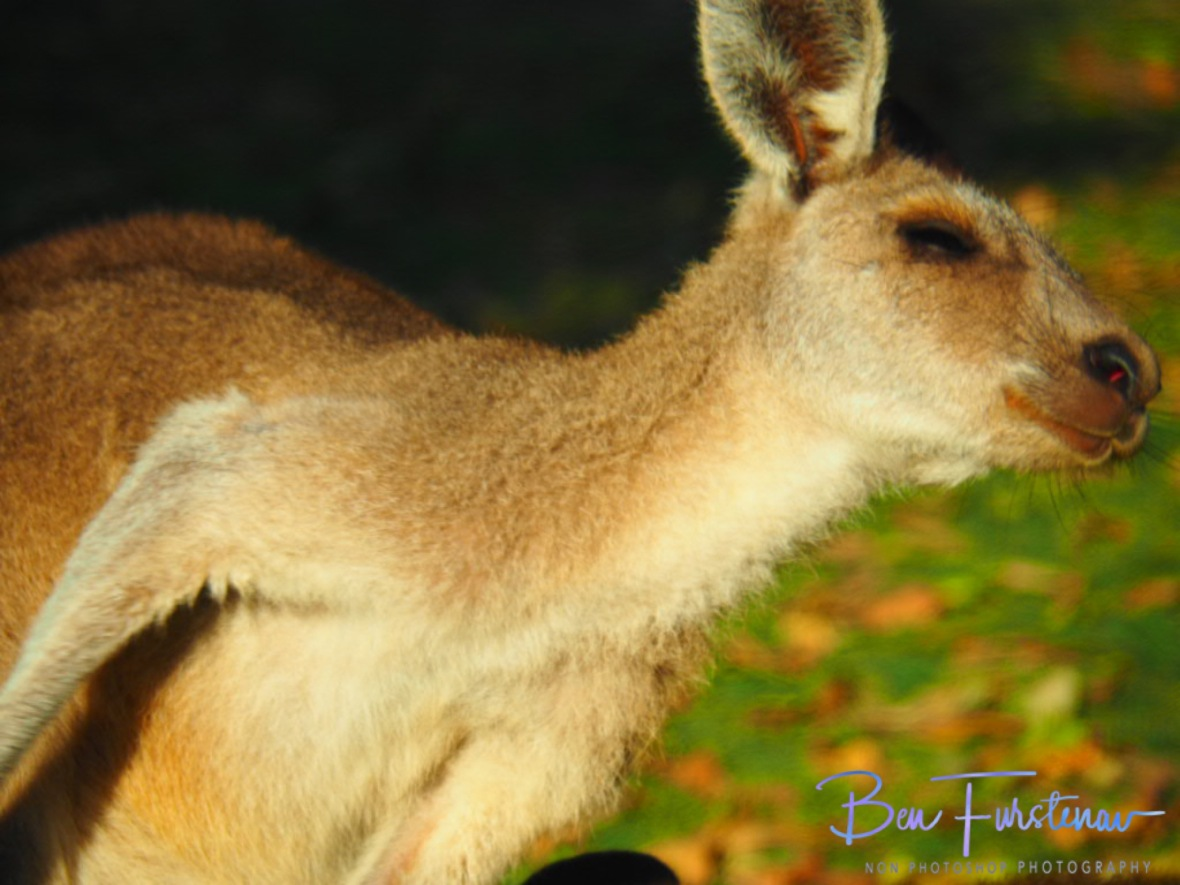 Sooooo good @ Woody Head, Northern New South Wales, Australia