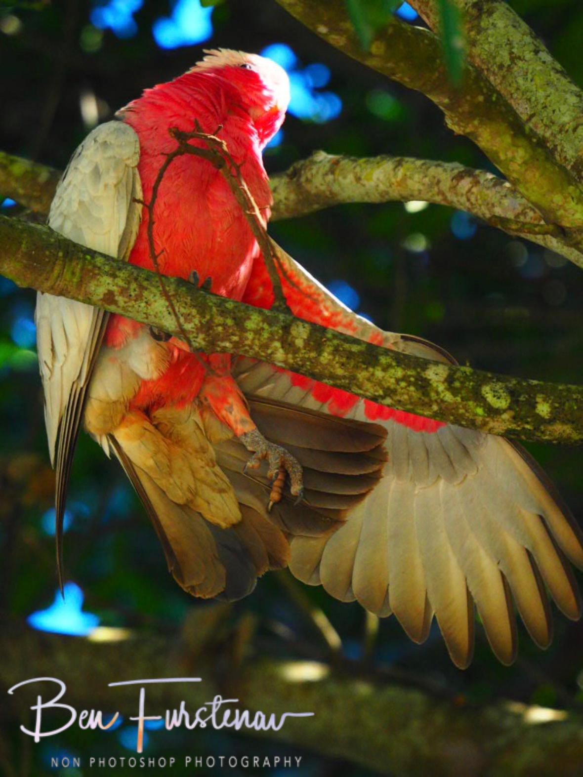 Warm-ups @ Woody Head, Northern New South Wales, Australia