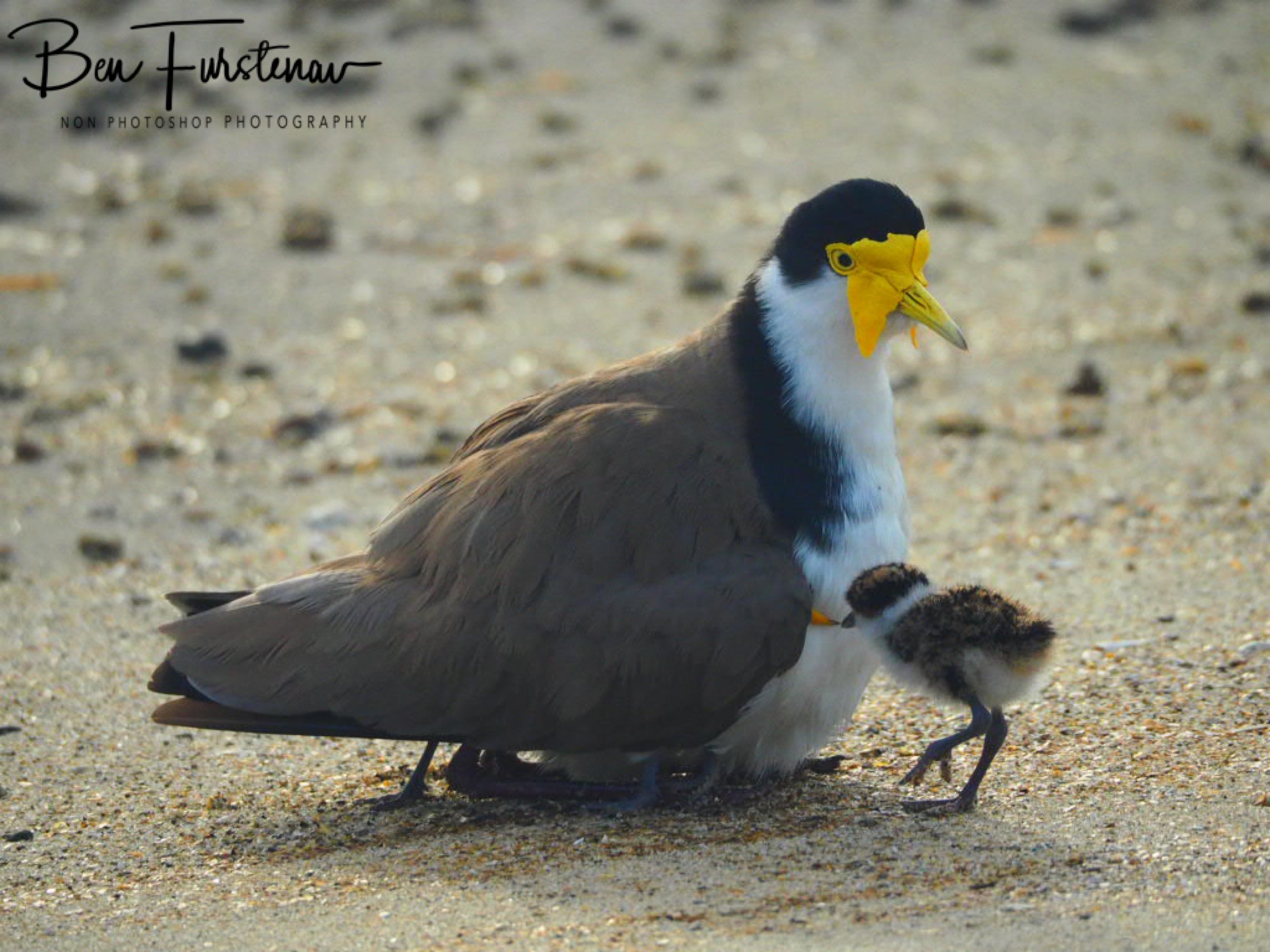 Creature comforts @ Deception Bay, South-East Queensland, Australia
