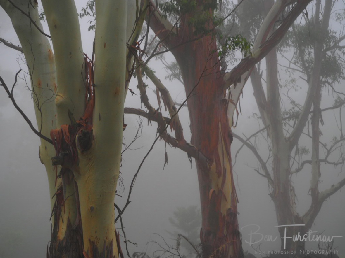 Gondwana @ Lismore area, Northern New South Wales, Australia