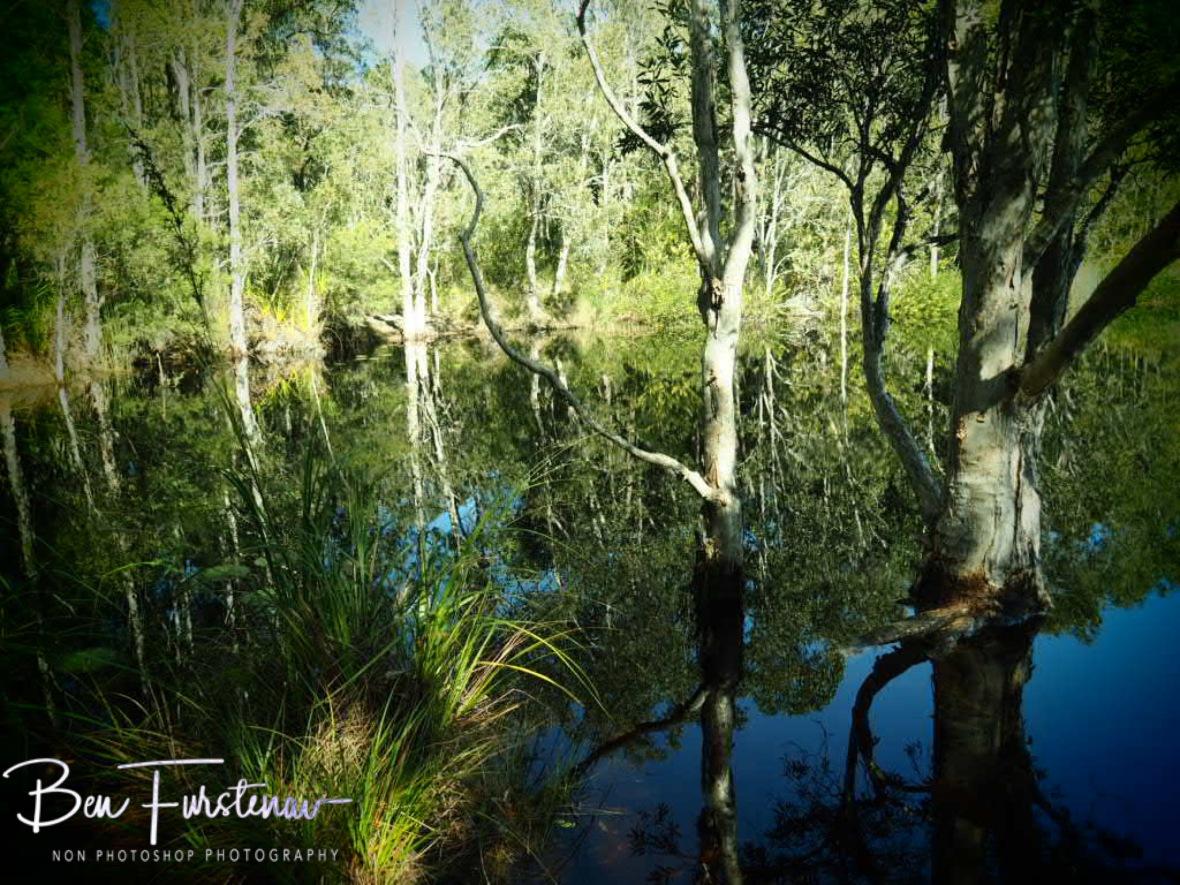 Tyagara Swamp reflections @ Brunswick Heads, Northern New South Wales, Australia