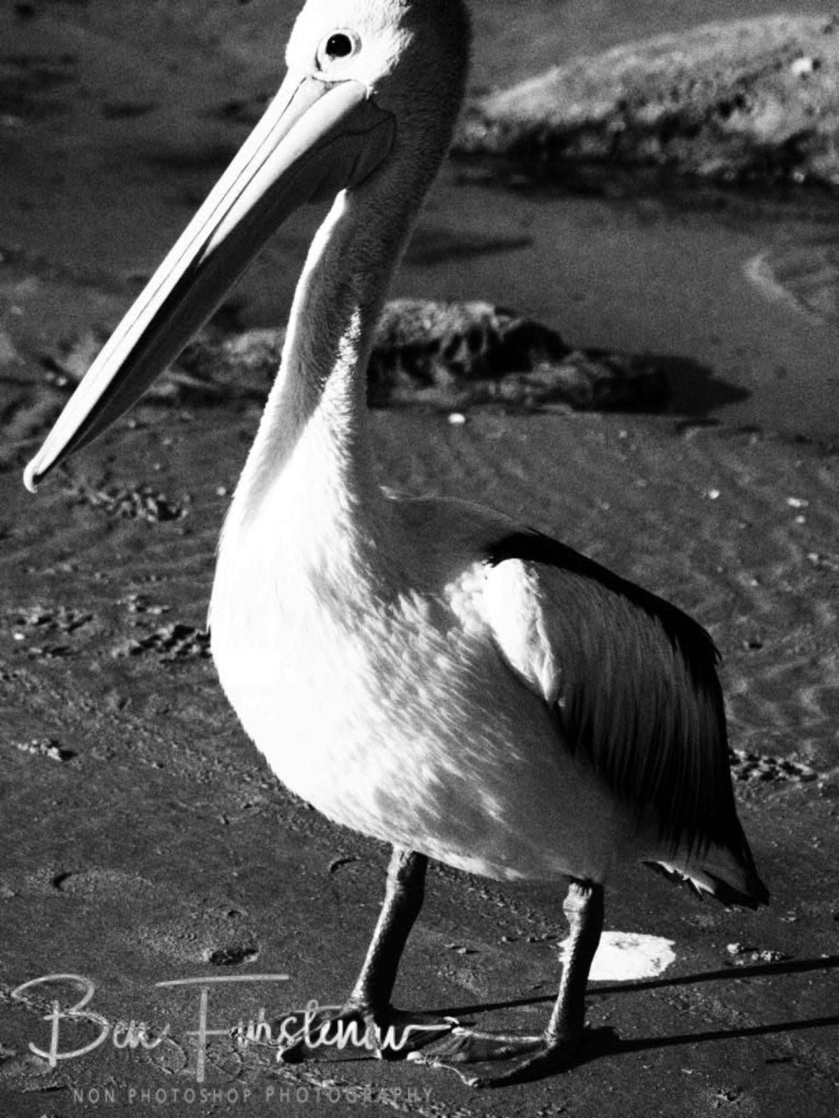 Black and white @ Woody Head, Northern New South Wales, Australia