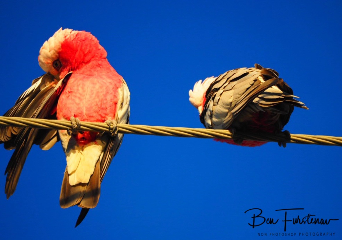Notebook @ Deception Bay, South-east Queensland, Australia
