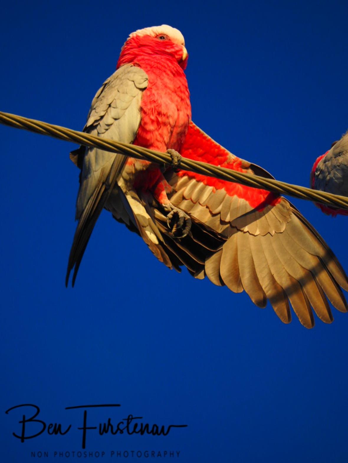Signal @ Deception Bay, South-east Queensland, Australia