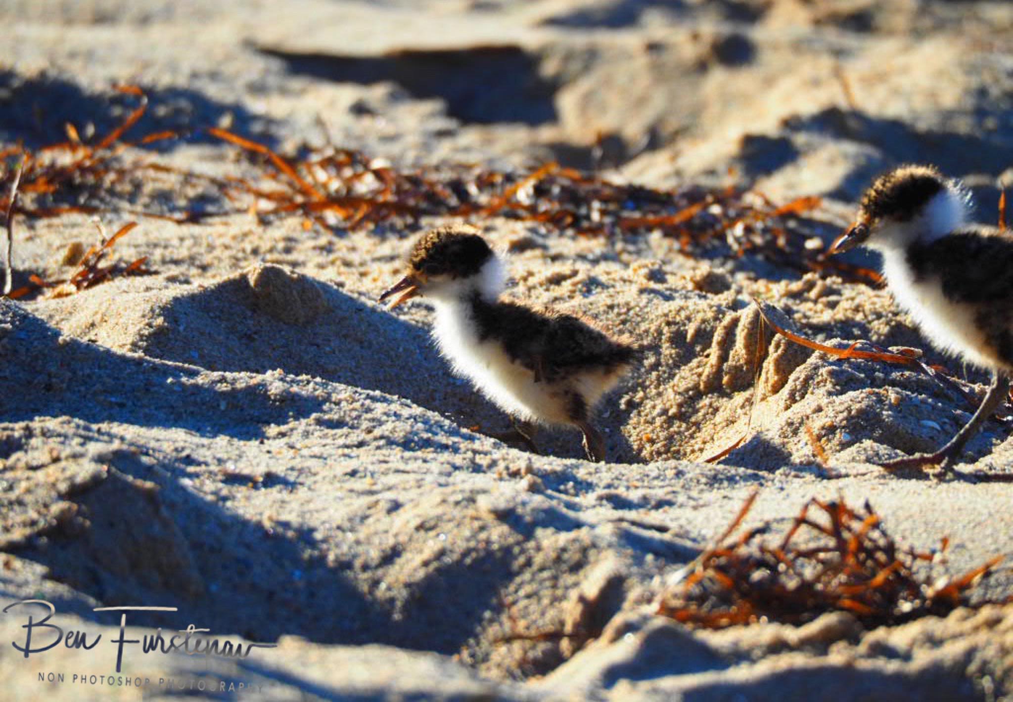 Footsteps @ Deception Bay, South-East Queensland, Australia