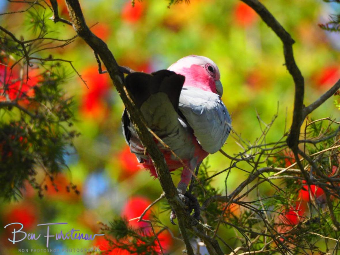 Novice! @ Golden Beach, South-east Queensland, Australia