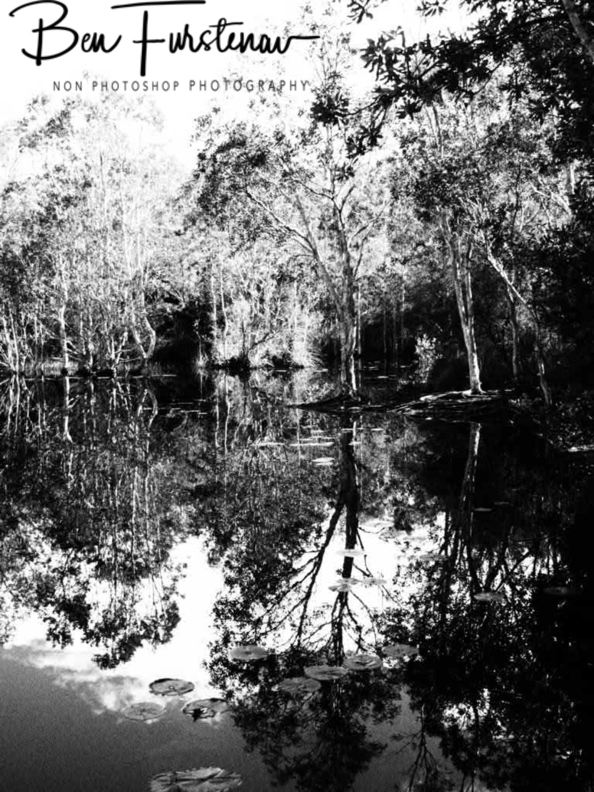 Mirror reflections in black and white at tyagara swamp @ Brunswick Heads, Northern New South Wales, Australia