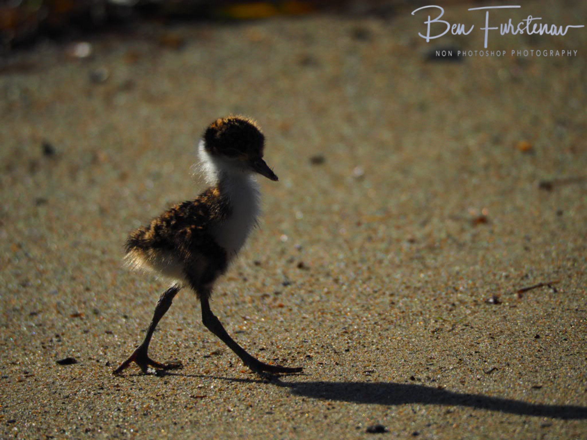 Beach stroll @ Deception Bay, South-East Queensland, Australia