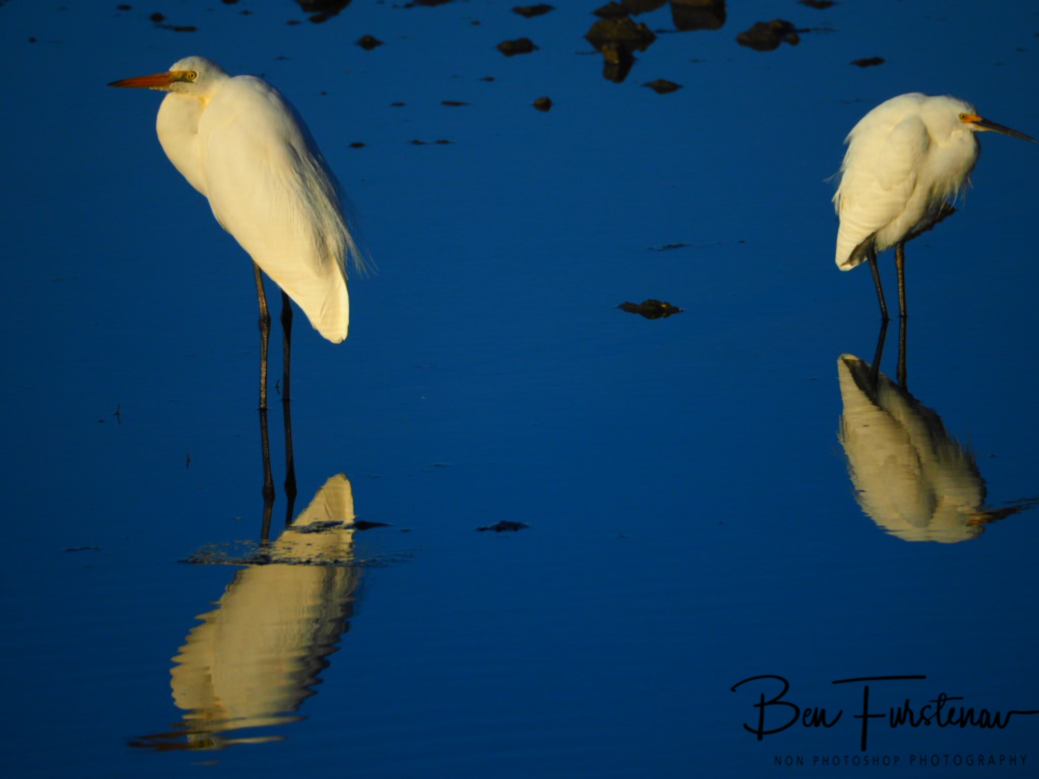 Visitors @ Deception Bay, South-East Queensland, Australia