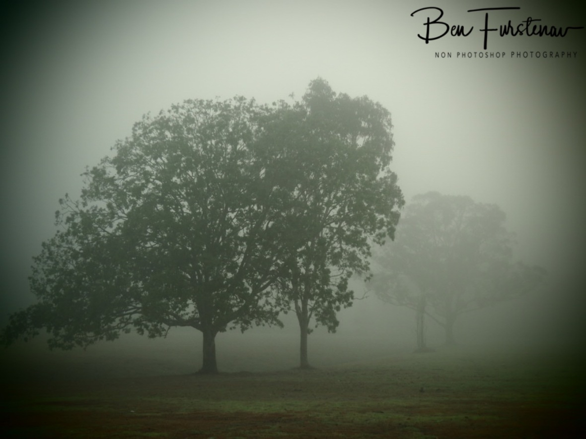 Heavy fog @ Lismore area, Northern New South Wales, Australia