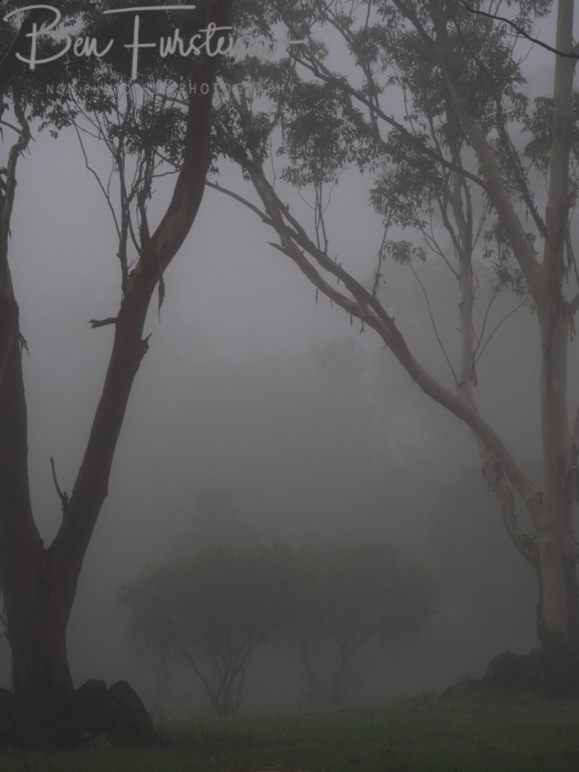 Spooky scene @ Lismore area, Northern New South Wales, Australia