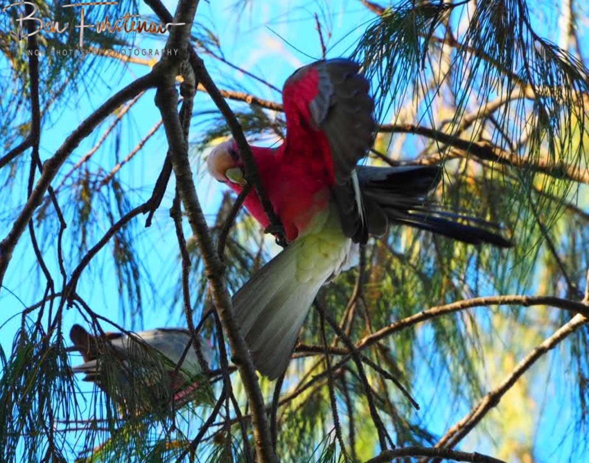 Glitch @ Woolgoolga, Northern New South Wales, Australia