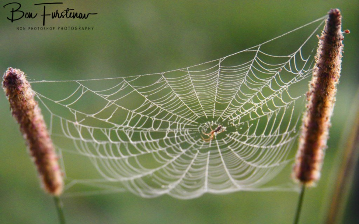 Visible spider art @ Ulmarra, Northern New South Wales, Australia