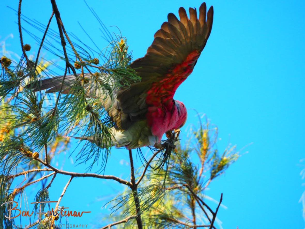 Balancing act @ Woolgoolga, Northern New South Wales, Australia