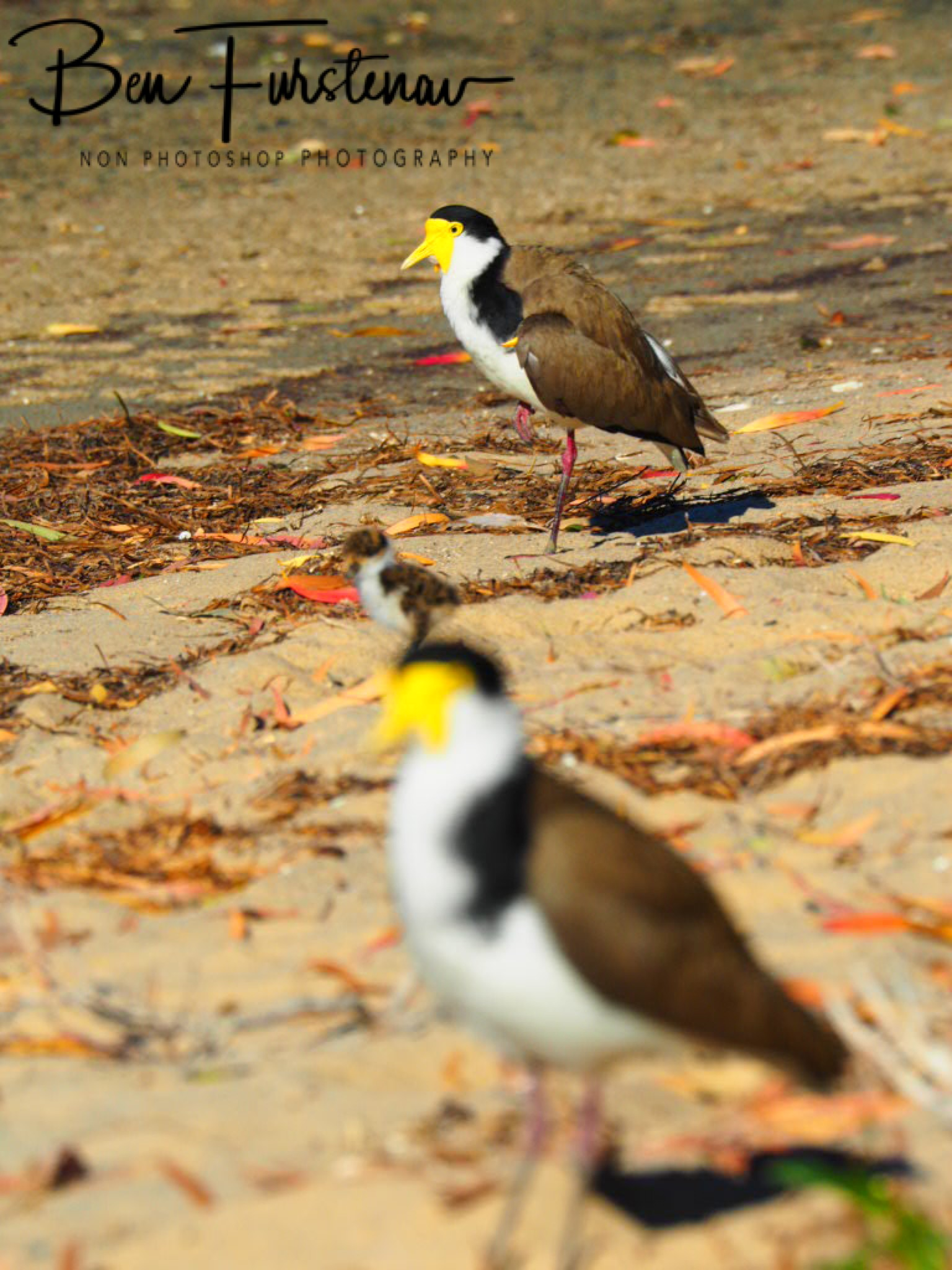 Fixated @ Deception Bay, South-East Queensland, Australia