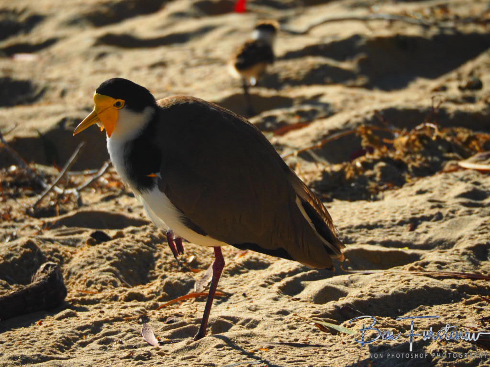 Scattered @ Deception Bay, South-East Queensland, Australia