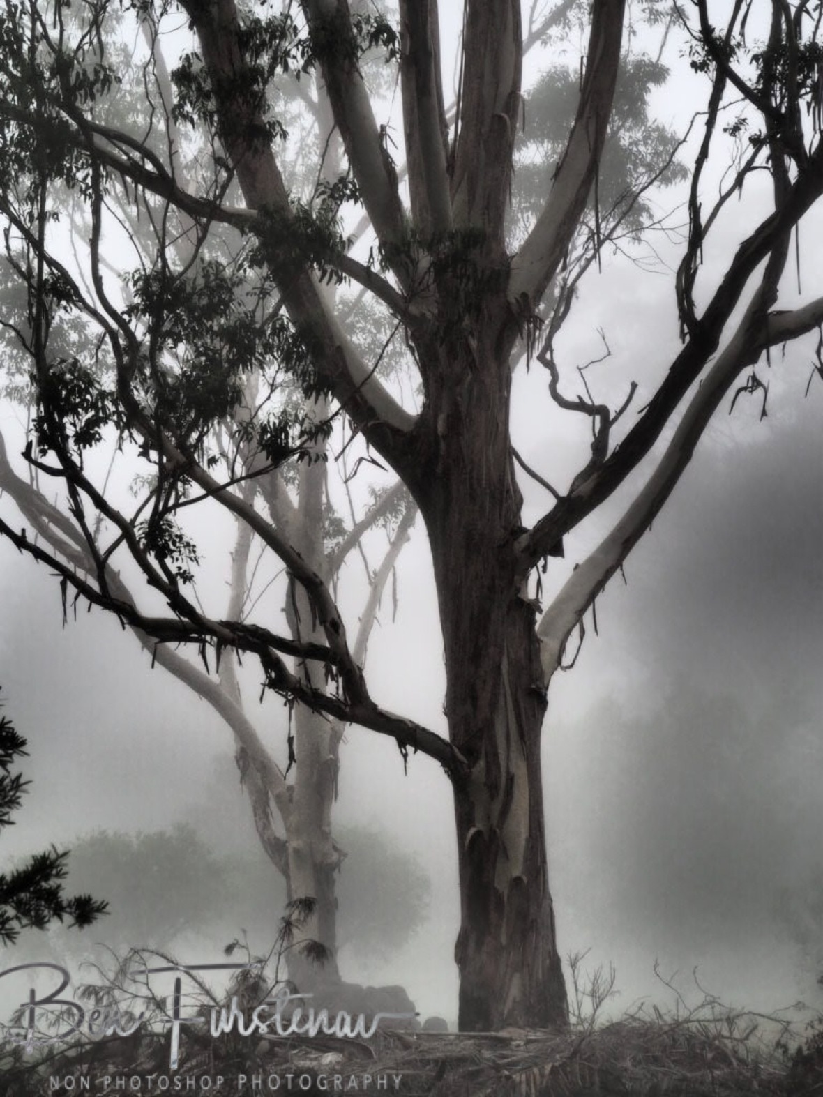 Mist-erious @ Lismore area, Northern New South Wales, Australia