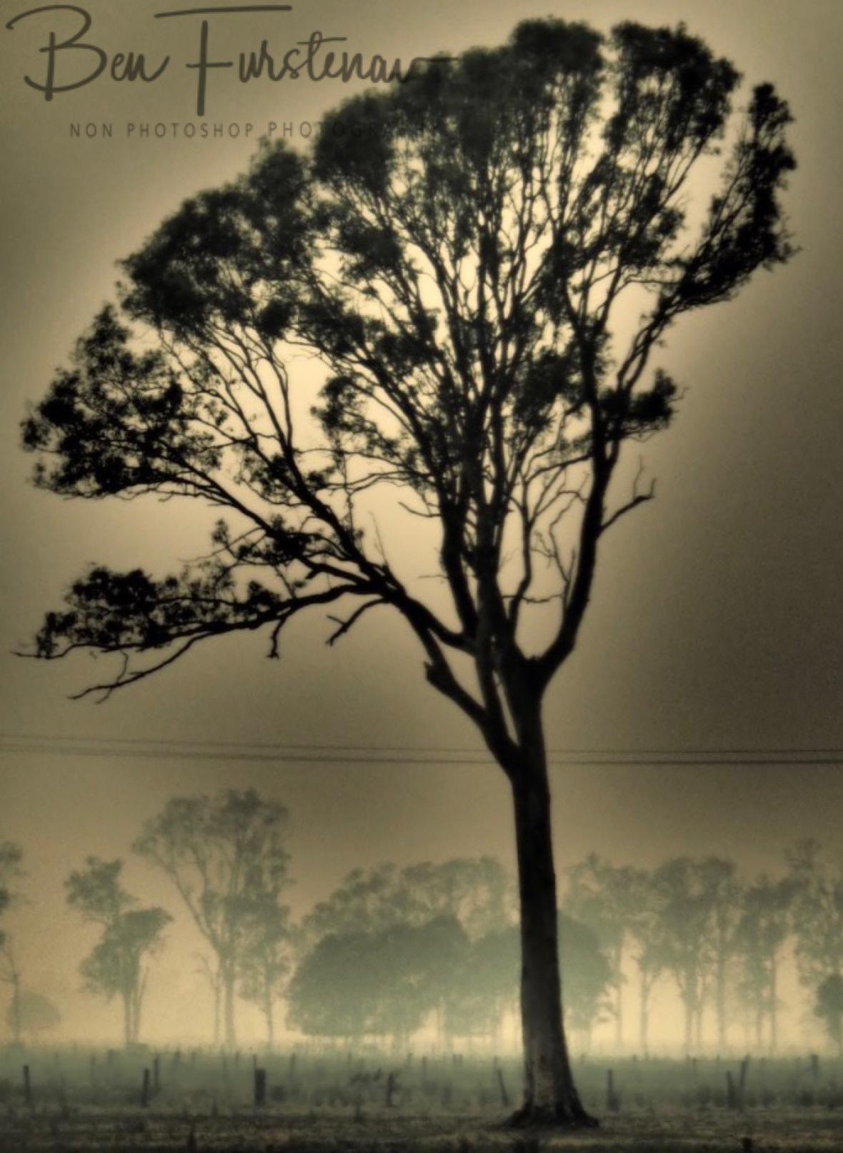 Up in smoke @ Ulmarra, Northern New South Wales, Australia