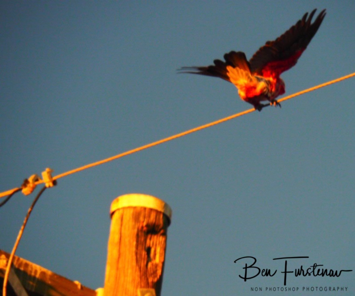 Halt! @ Evans Head, Northern New South Wales, Australia