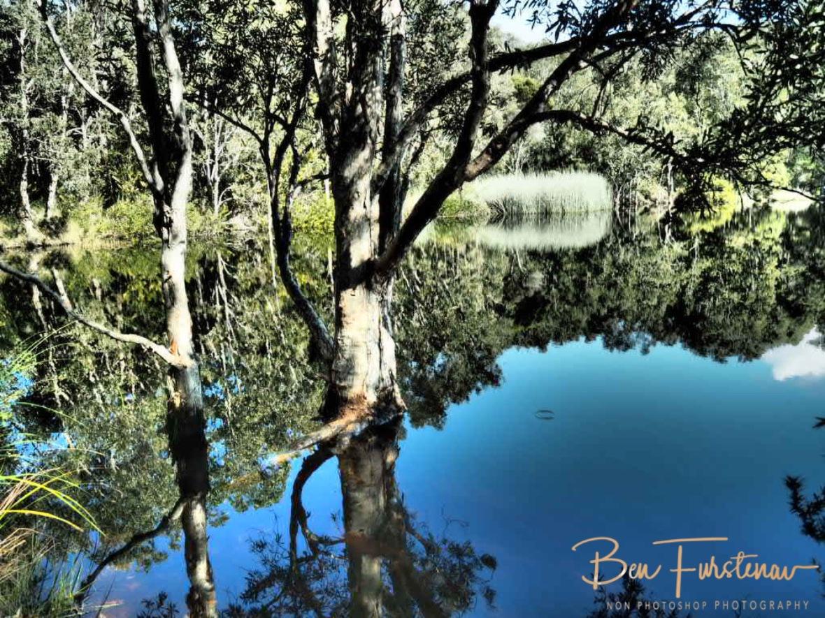 Mirror reflections at tyagara swamp @ Brunswick Heads, Northern New South Wales, Australia