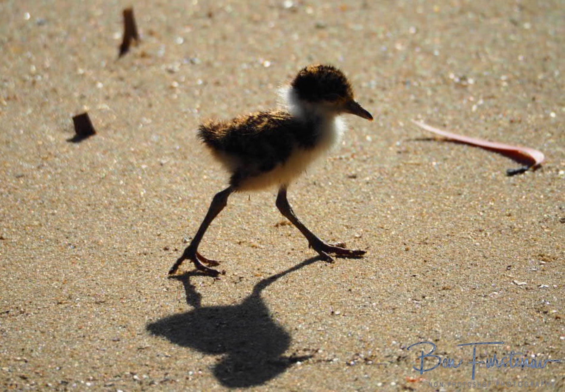 Wandering shadows @ Deception Bay, South-East Queensland, Australia