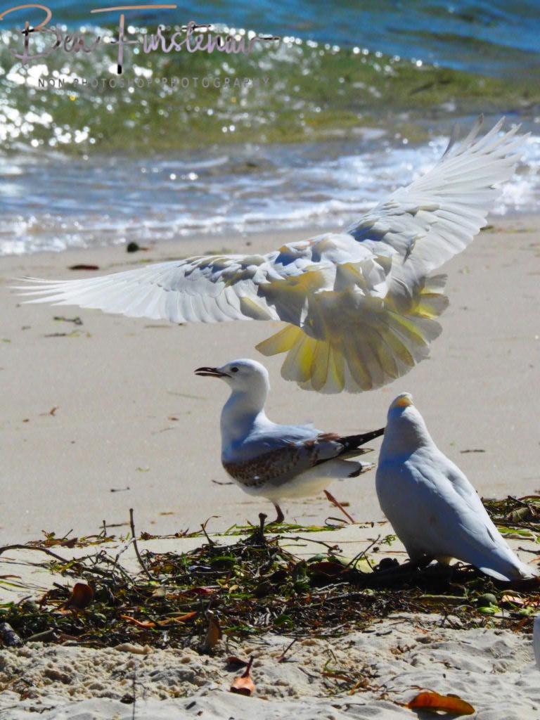 Social distancing @ Bribie Island, South-East Queensland, Australia