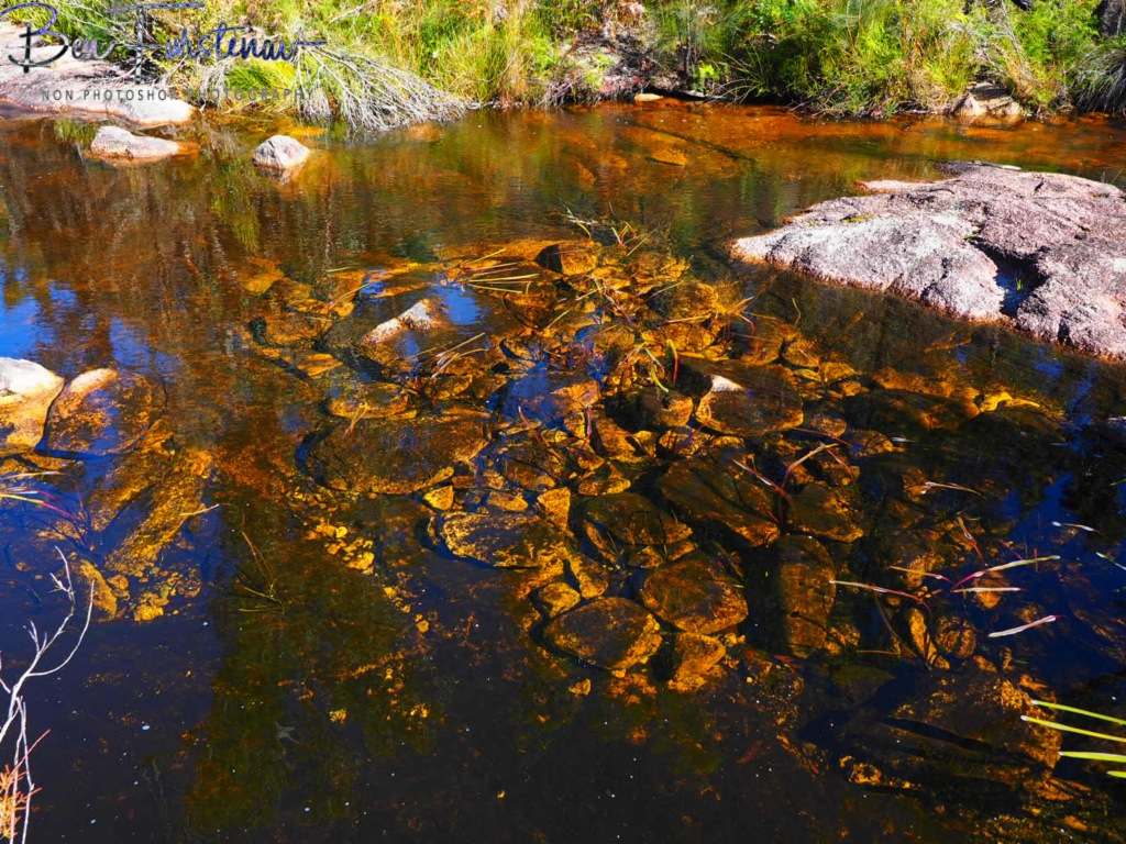 Basket Swamp National Park, Tenterfield, Northern New South Wales, Australia