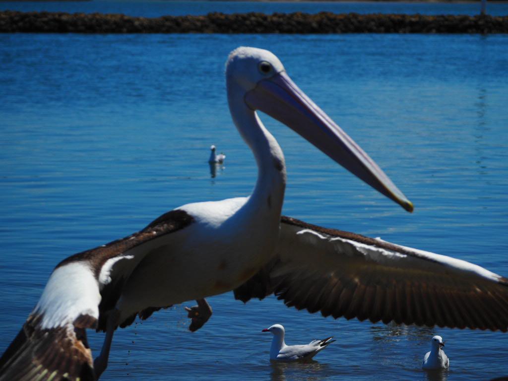 Iluka, Northern New South Wales, Australia