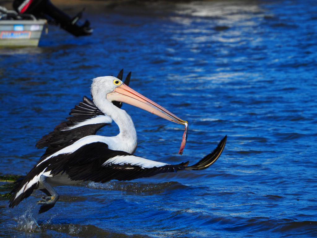Golden Beach, Caloundra, Sunshine Coast, Queensland, Australia