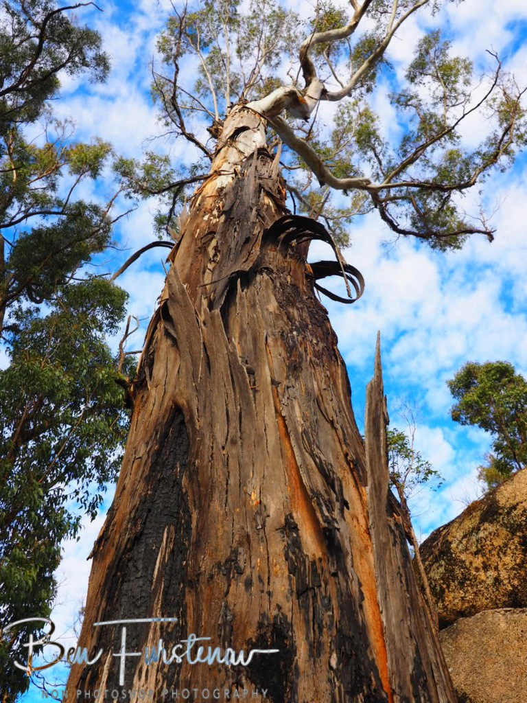 Bald Rock National Park, Tenterfield, Northern New South Wales, Australia