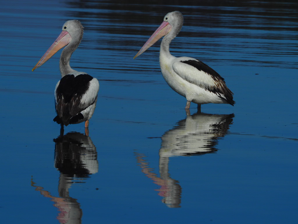 Nambucca, Northern New South Wales, Australia